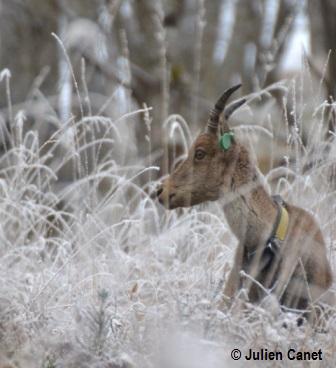 Etagne de 10 ans dans l'herbe gelée