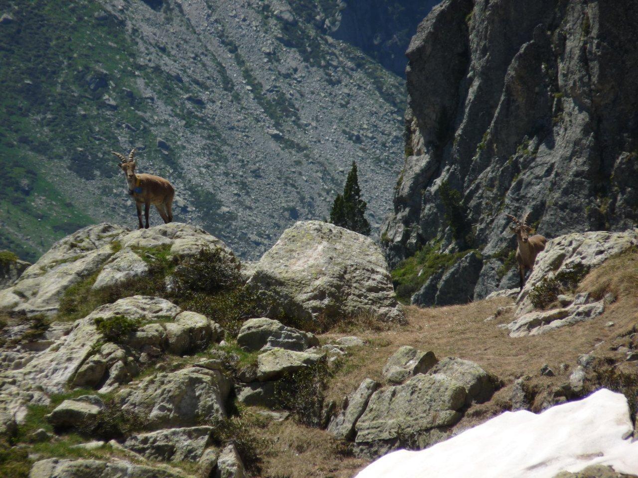 Rayo et Yao © S.Guichemer - Parc national des Pyrénées