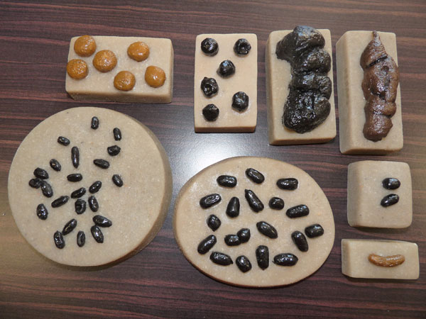Fac-similés de crottes de bouquetins et espèces voisines