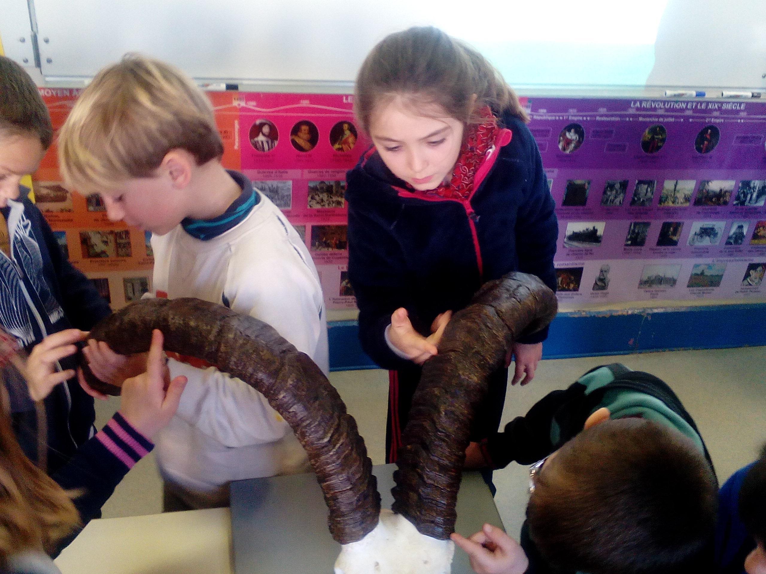 Les enfants sont autour des reproductions de crânes de bouquetins taille réelle.