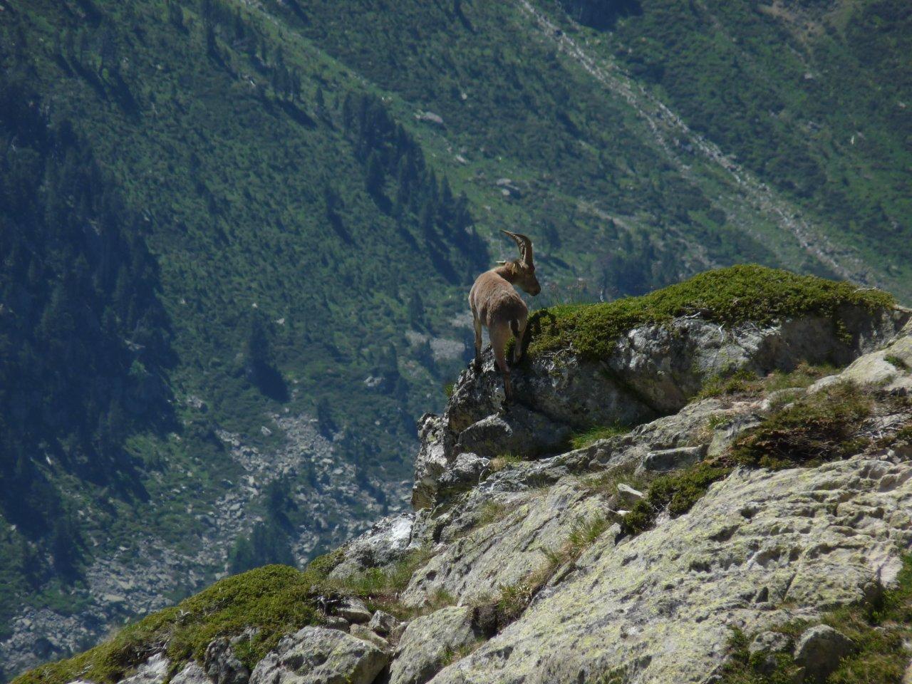 Rayo © S.Guichemer - Parc national des Pyrénées