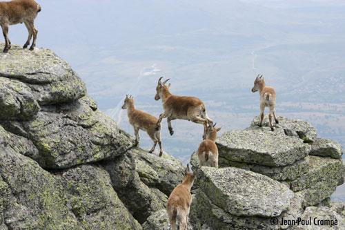 Groupe de jeunes mâles sur les rochers
